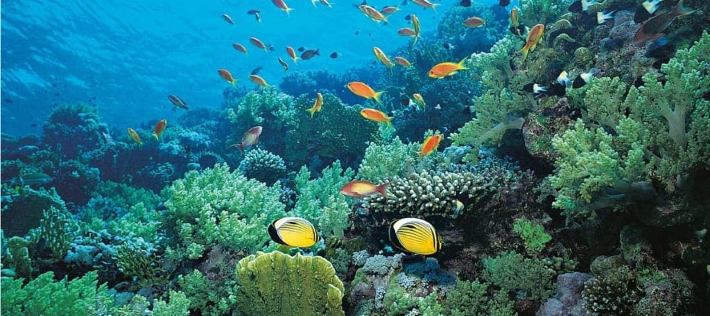 The Mediterranean is teeming with underwater life.
